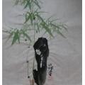 Bambus na skále 2